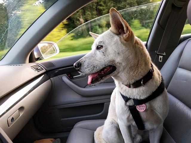 6 sposobów na posprzątanie wnętrza samochodu z sierści zwierząt